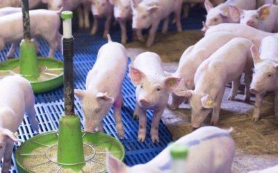 Moins d'antibiotiques