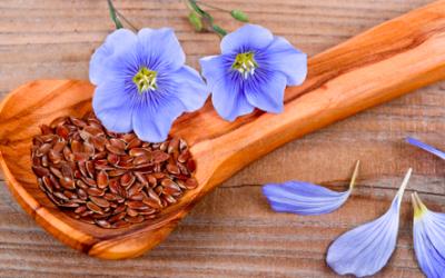 Les bienfaits des graines de lin, de l'auge à la table